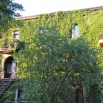 Houses covered in Ivy, Le Plateau, Montreal